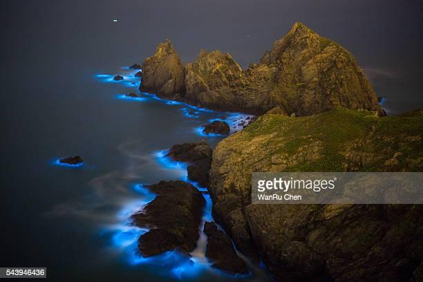 Blue Tears Bioluminescent algae Noctiluca Scintillans