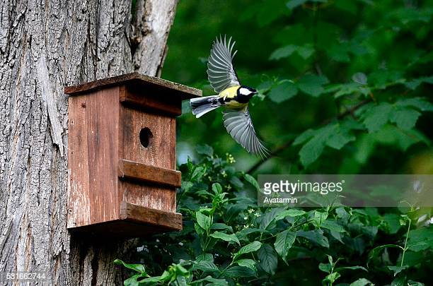 blue tit flying out of nesting box - birdhouse stock photos and pictures