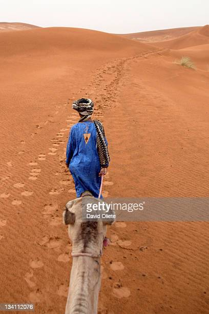blue touareg with camel - david oliete stockfoto's en -beelden