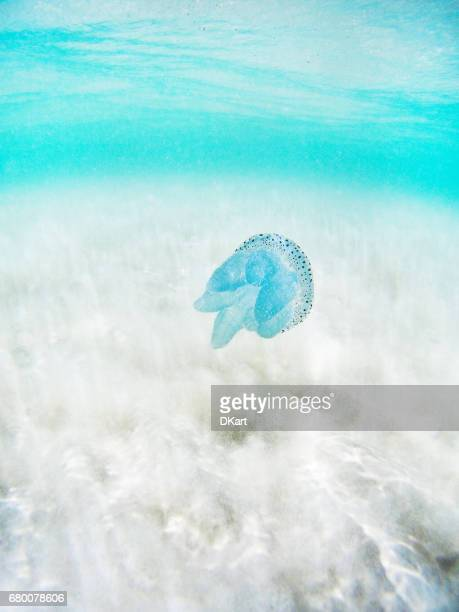 Blue Tropical Jellyfish