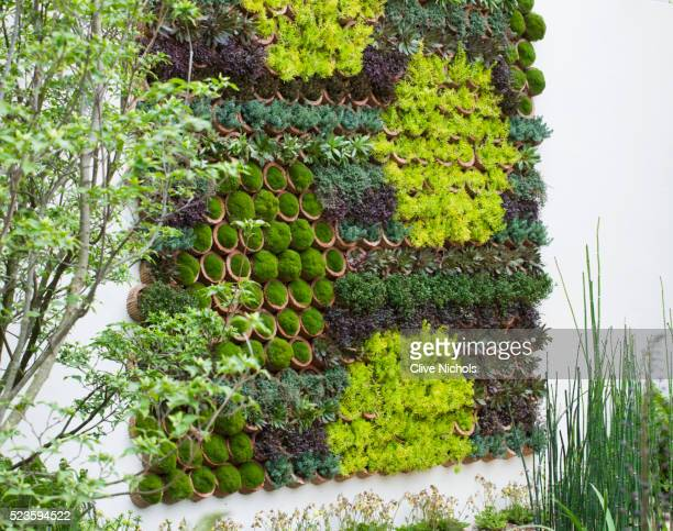 rbc blue water garden - chelsea flower show stock pictures, royalty-free photos & images
