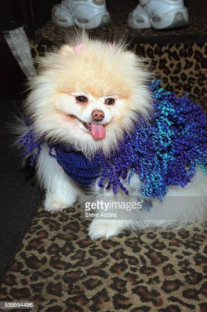 Blue woolen overcoat
