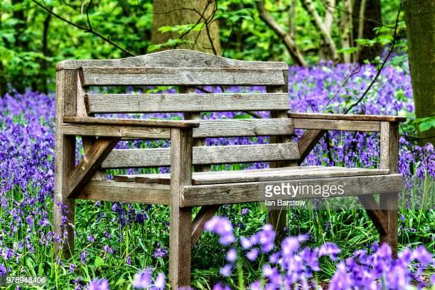 bluebell and bench - barstow stock photos and pictures