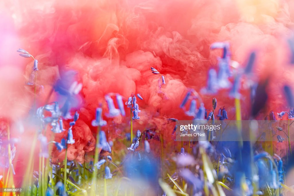 Bluebell flowers with red colour smoke flare