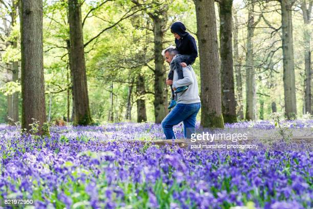 bluebell forest - single father stock pictures, royalty-free photos & images