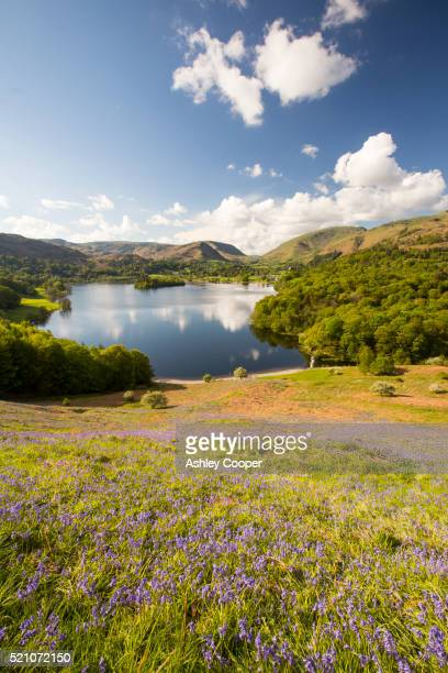 Bluebells on Loughrigg terrace, Lake District, UK.