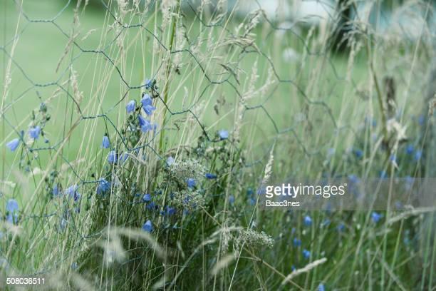 bluebells - フィンノイ ストックフォトと画像