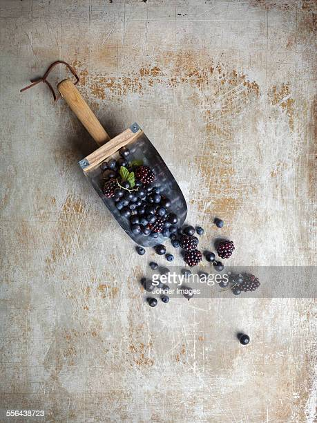 Blueberries and blackberries on trowel