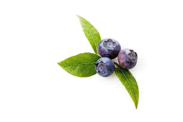 blueberries, vaccinium myrtillus - 藍莓 個照片及圖片檔