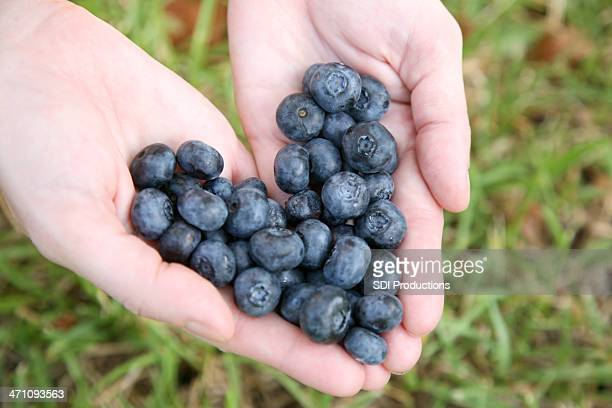 Blueberry Heart in Hand