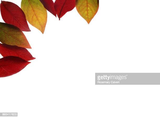 Blueberry leaves creating autumnal corner design.