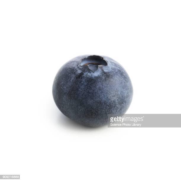 blueberry - ブルーベリー ストックフォトと画像