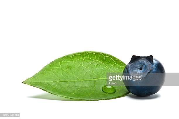 blaubeeren mit blättern - blatt pflanzenbestandteile stock-fotos und bilder