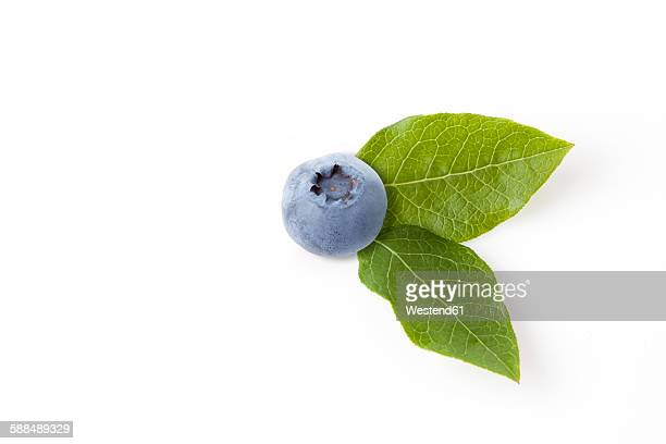 Blueberry with leaves on white ground
