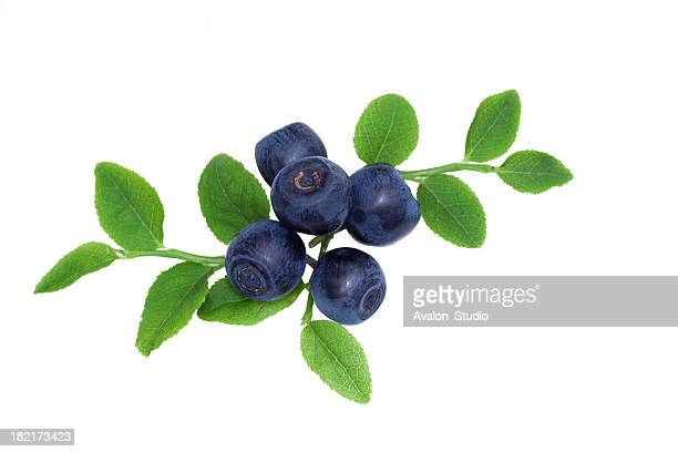 Blueberry with letters on a white background.