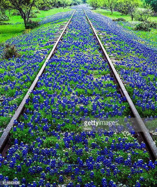 Bluebonnet wildflowers and old railroad track near Llano Texas