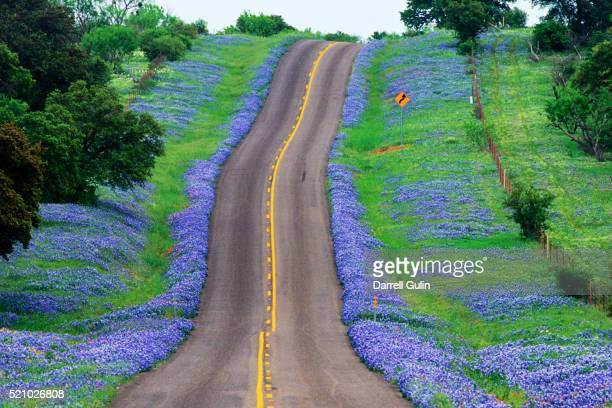 bluebonnets along a highway - texas bluebonnet stock pictures, royalty-free photos & images