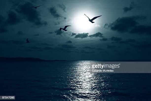 bluetiful wings - luz de la luna fotografías e imágenes de stock