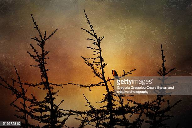 bluetit perching on tree branch - gregoria gregoriou crowe fine art and creative photography stock photos and pictures