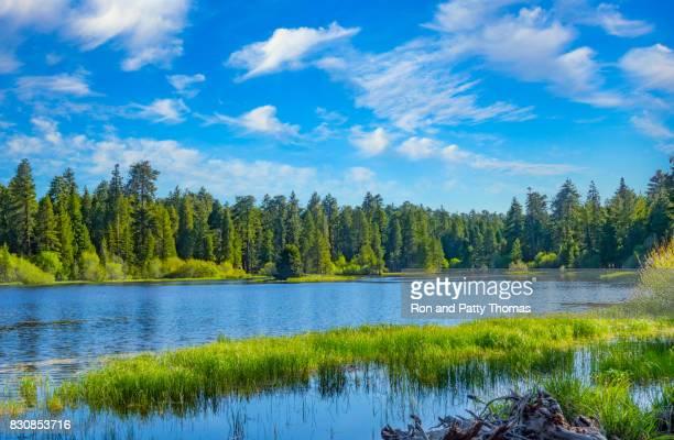 bluff lake at big bear lake san bernardino national forest, ca - big bear lake stock photos and pictures