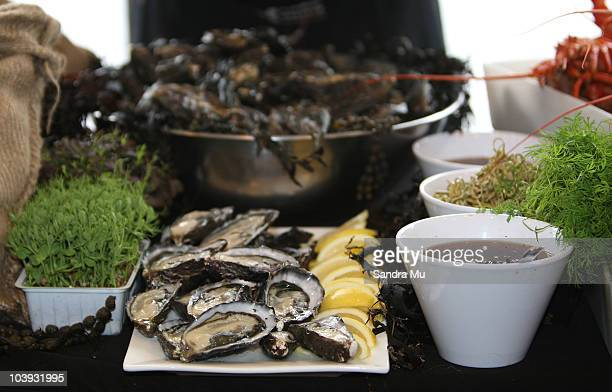 Bluff oysters are on display for tasting during the RWC 2011 One Year To Go celebrations at Eden Park on September 9 2010 in Auckland New Zealand