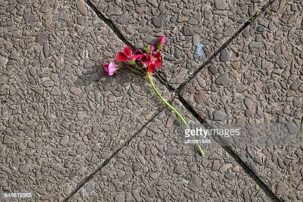 Blume liegt auf dem Gehweg