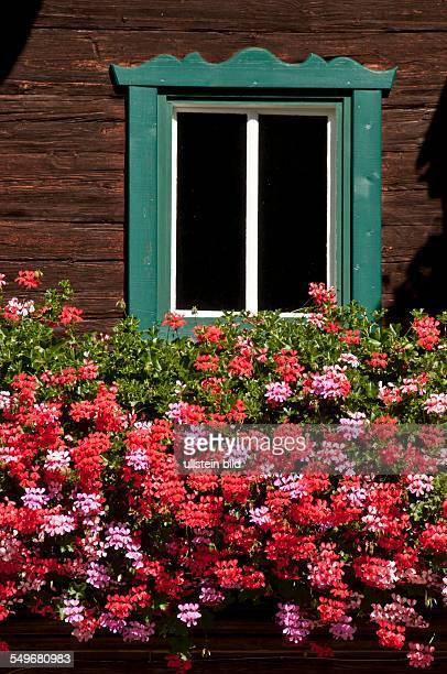 Blumen vor einem Fenster eines alten Bauernhauses aus Holz in Mayrhofen im Zillertal in Österreich