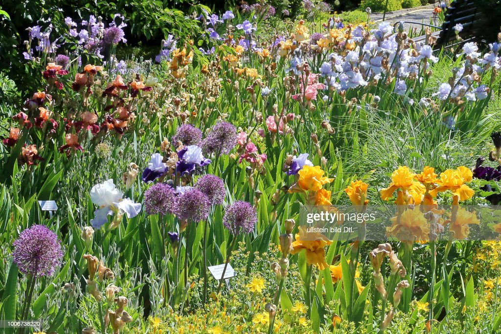 Blumenbeet Im Berggarten Hannover News Photo Getty Images