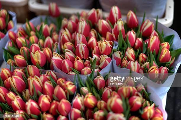 Blumenmarkt Tulips