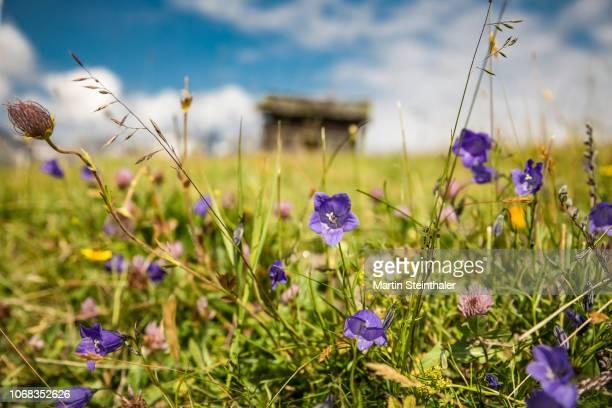 Blumenwiese auf einer Alm im Nationalpark Hohe Tauern
