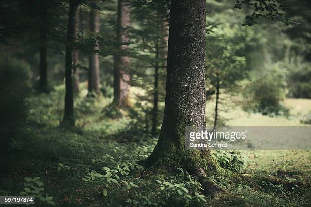 bluntautal impressions - tree trunk stock pictures, royalty-free photos & images