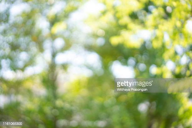 blur abstract background - lush foliage stock pictures, royalty-free photos & images
