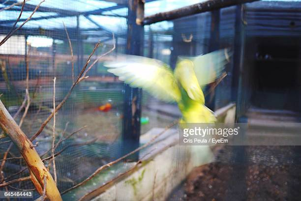 blur image of bird flying in cage - spread wings stock pictures, royalty-free photos & images