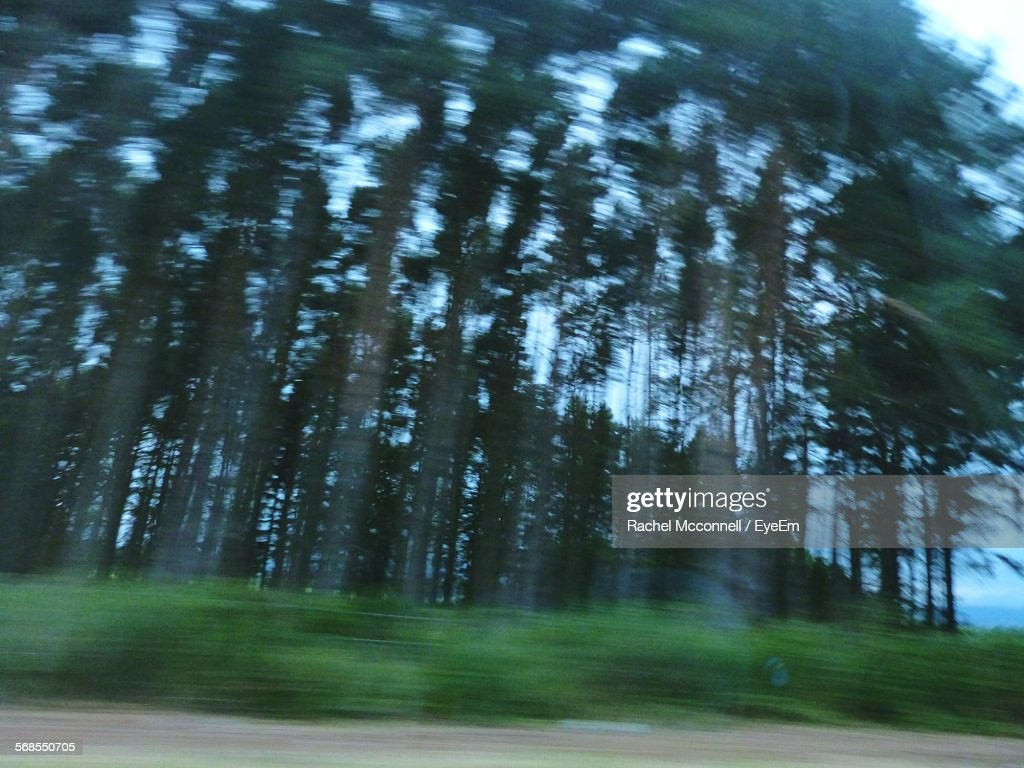 Blur Image Of Trees In Forest : Stock Photo