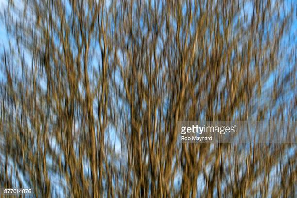 Blur of the bare branch