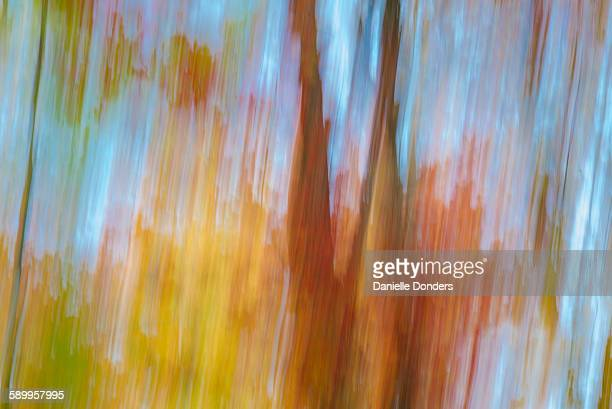 Blurred autumn leaves against a blue sky