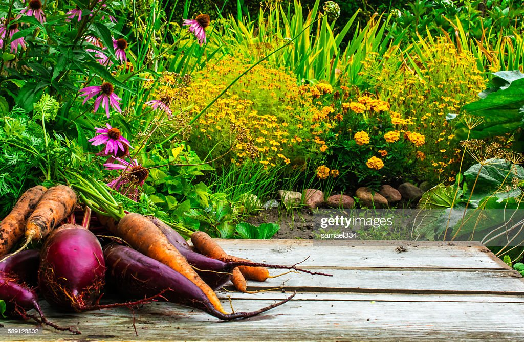 Blurred Background Of Autumn Garden And Wooden Desk With