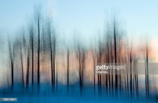 blurred bare trees and snow with pink sky - ogphoto bildbanksfoton och bilder