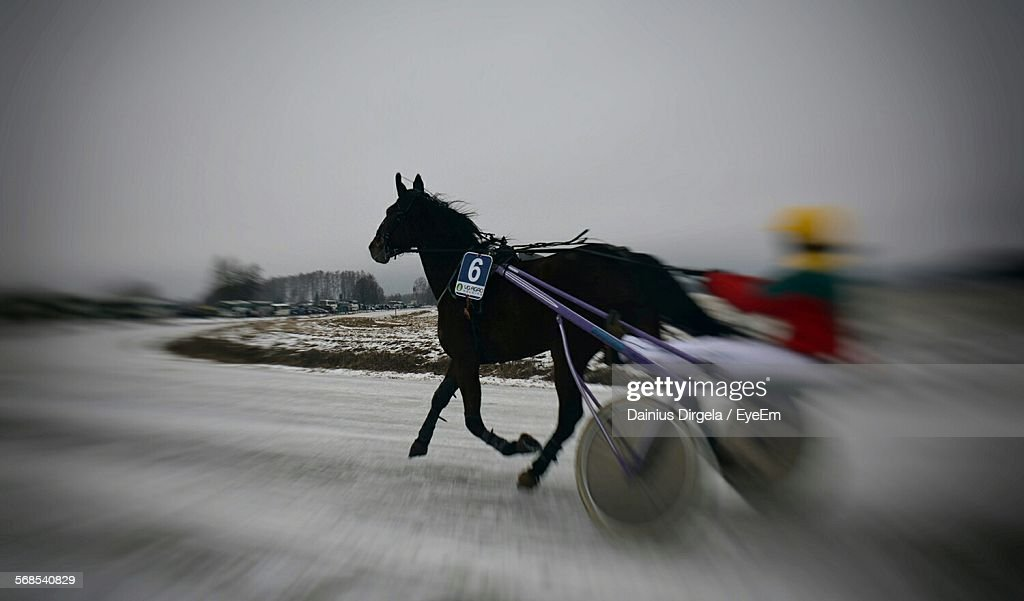Blurred Motion Of Harness Racing On Snow Covered Track : Stock Photo