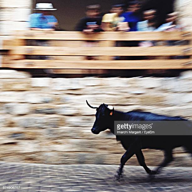Blurred Motion Of People Looking At Bull Running On Street