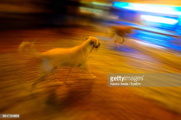 blurred motion of stray dogs on footpath at night - dog turkey stock pictures, royalty-free photos & images