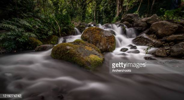 blurred motion water in a rocky rainforest stream - hannah brooks stock pictures, royalty-free photos & images
