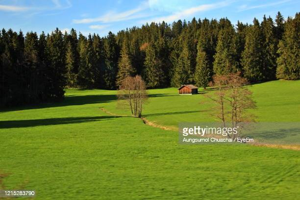 blurred of nature landscape of mountain, pine forest and green field above a village in switzerland. - aungsumol stock pictures, royalty-free photos & images