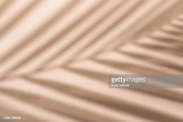 blurred palm leaf shadow wall pastel beige background. - beige stock-fotos und bilder