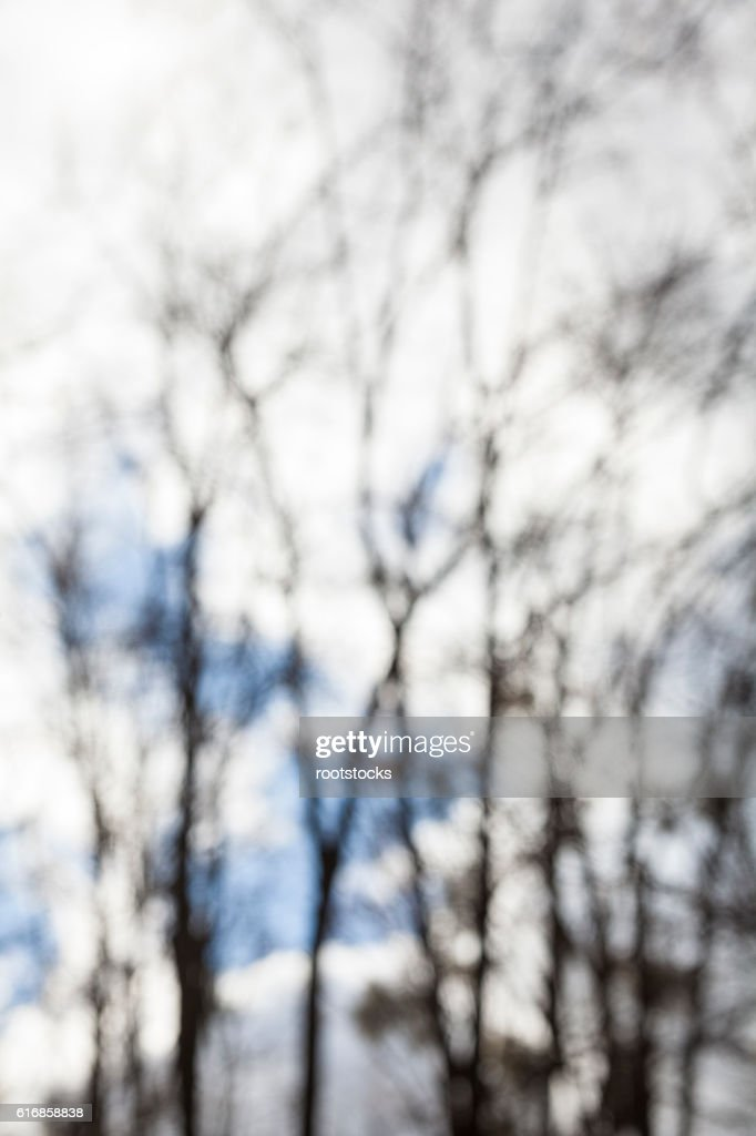 Blurred silhouettes of the bare trees : Stock Photo