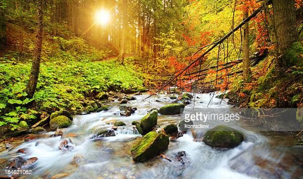 blurred stream flowing through the woods during fall - spring flowing water stock pictures, royalty-free photos & images