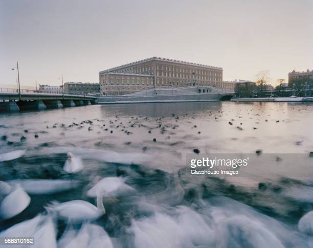 blurred swans in water with royal palace in background, stockholm, sweden - the stockholm palace stock pictures, royalty-free photos & images