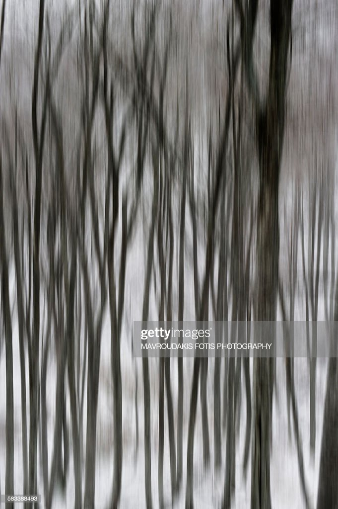 Blurred tree forest : Stock Photo