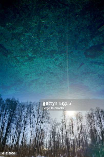 Blurred trees sun on lake transparent clear blue water surface