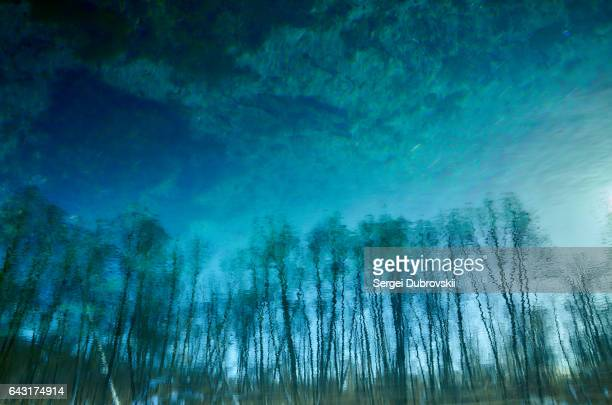 blurred trees sun on lake transparent clear blue water surface - lake bottom stock photos and pictures